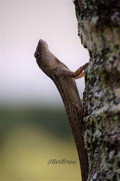 photography lizard nature tree
