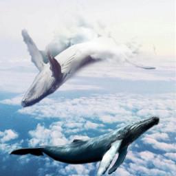 freetoedit whales sky