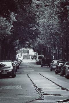 rainy almostblackandwhite street trees alleyway