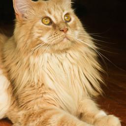 princess mylover girl cat