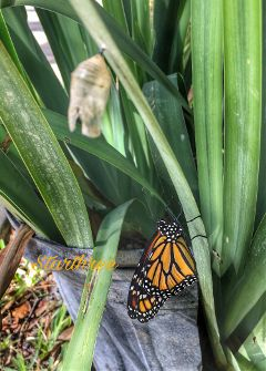 emerged butterfly nature plant photography