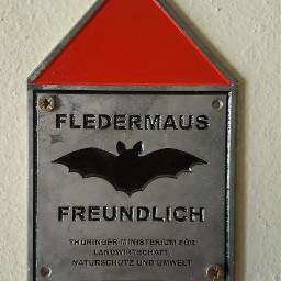 bat sign interesting savenature attic