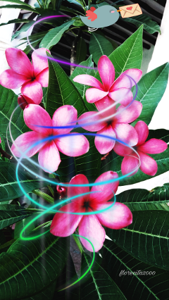 flowers nature clipart myphoto