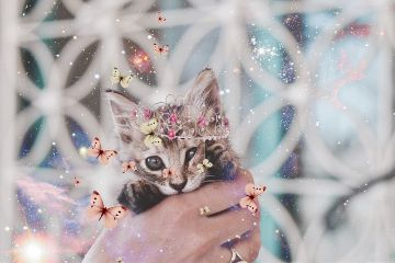 freetoedit cat crown sparkles galaxy