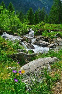 freetoedit góry travel flowers g