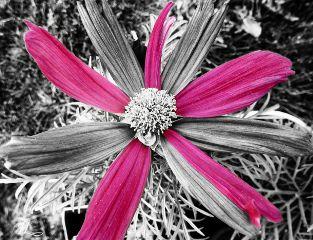 freetoedit colorsplash splashcolor
