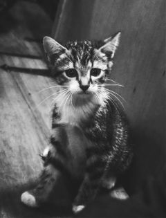 blackandwhite kitty petsandanimals photography