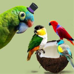 freetoedit parrot parrots birds coconutremix