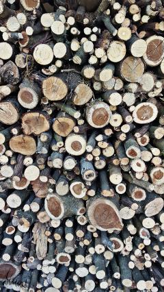 wood nature photo