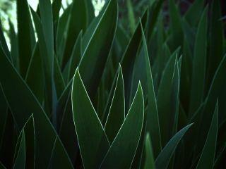 nature photography closeup plant leaves freetoedit