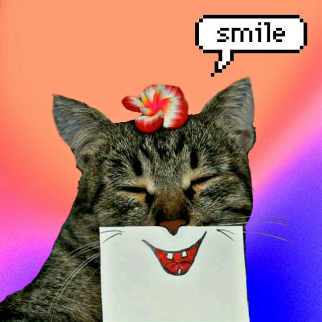 #cat #smile