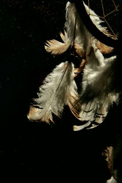 freetoedit dreamcatcher feather emotions photography