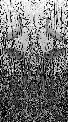 mirroreffect snowyegret wetlands grass
