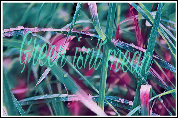 freetoedit green grass beauty
