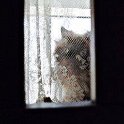cats framedpictures dubai photography photoftheday