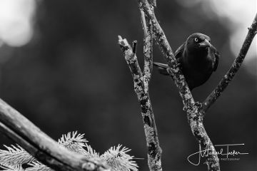 blackandwhite photography petsandanimals nature bird