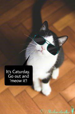 freetoedit cute petsandanimals sunglasses stickers