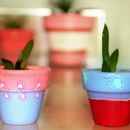 freetoedit succulents