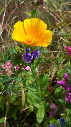 freetoedit nofilter nofilternoedit flower nature