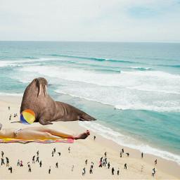 freetoedit beach girl walrus beachball