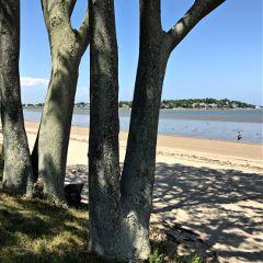 nature shadows beach trees freetoedit