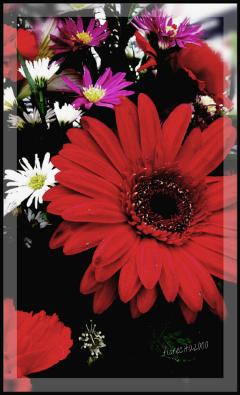 flowers nature myphoto