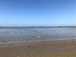 beach seagull freetoedit