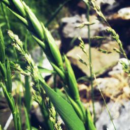 freetoedit plant green photography stones