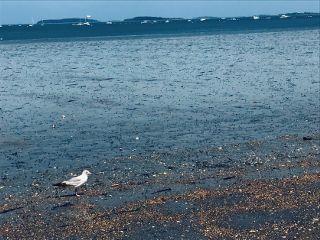 freetoedit seagull beach