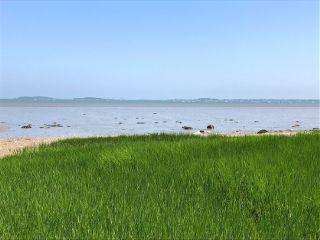 horizon sea green beach grass freetoedit