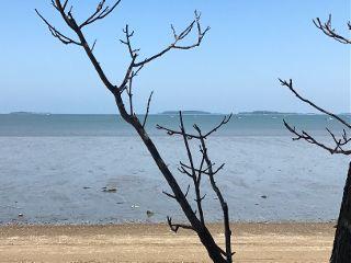 sea branches beach horizon nearandfar freetoedit