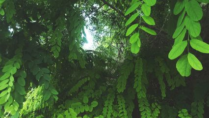 freetoedit green nature background