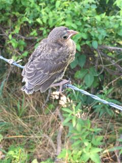 freetoedit baby bird socute mypic