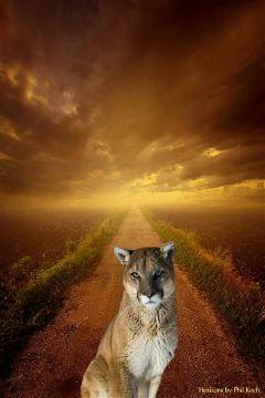freetoedit nature petsandanimals summer cat