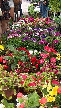 dpcflowershops flowers nature market photography