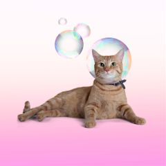 freetoedit bubblehead cat inthebubble bubbles