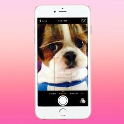 freetoedit animal selfie