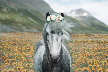 freetoedit pony horse flowers flowercrown