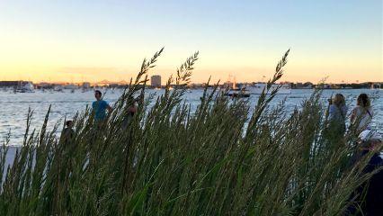 freetoedit sunset nearandfar grass horizon