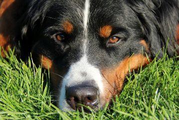 freetoedit dog doglove nature petsandanimals