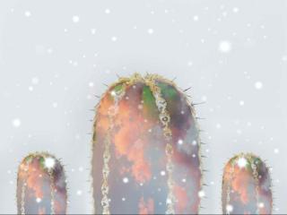 freetoedit cactus cacti clouds overlay