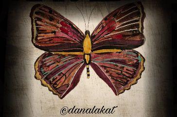 art drawing painting butterflies artist