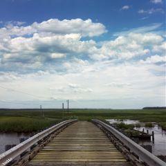 freetoedit blackwaternaturepreserve bridge myoriginalphoto