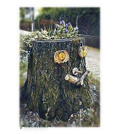 tree face magicfilter myberlin streetphotography freetoedit
