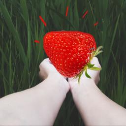 freetoedit giantfruits