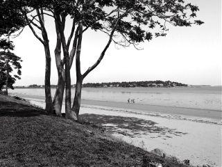 blackandwhite beach highangle tress shadows freetoedit