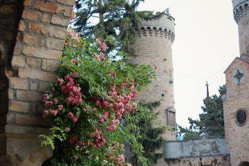 borycastle roses garden architecture