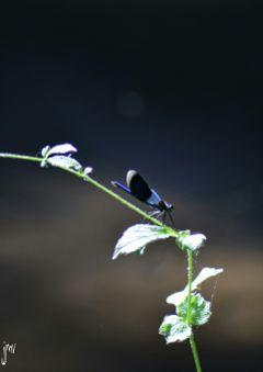 nikon photography naturephotography