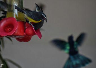 nature photography nikon bird