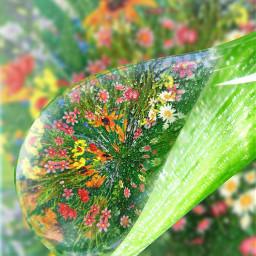 flowers dew dewdrop photostudiopro tinyplanetfx